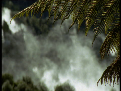 Fern frond sways gently in breeze, steam rises from volcanic vents in background, Rotorua, North Island, New Zealand