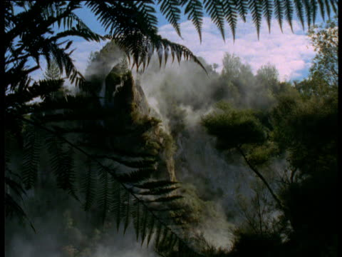 Fern frond waves in breeze as steam rises from volcanic vents in background, Rotorua, North Island, New Zealand