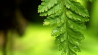 Fern Leaf Loop