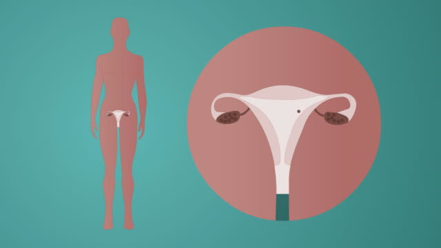 fertilization and birth control pill animation