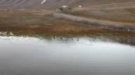 A few Common Eiders (Somateria mollissima) at a small lake in Spitsbergen, Svalbard archipelago