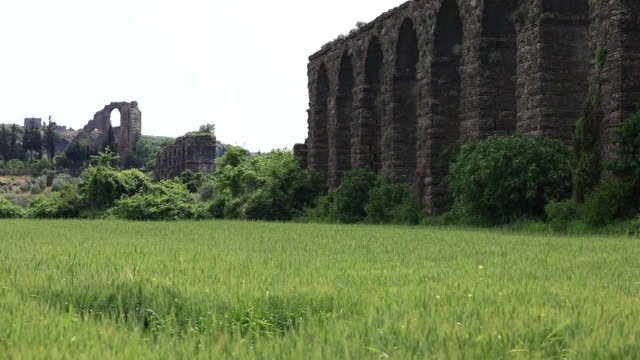 Field and old wall