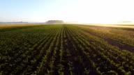AERIAL Feld Mais In den Sunrise