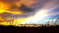 Gebied van feather gras bij zonsondergang