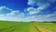 CRANE DOWN: Field