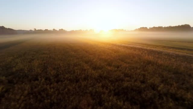 AERIAL Fields Covered With Morning Mist