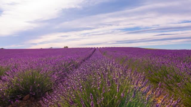 Lavendel-Felder
