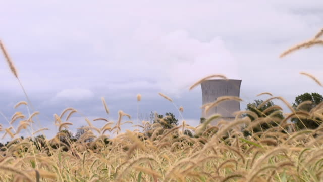 MS, Fields of weeds with tower of nuclear reactor in background, Oak Harbor, Ohio, USA