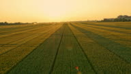 AERIAL Bereich der Weizen bei Sonnenuntergang