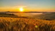 T/L Fields of wheat in the sunrise
