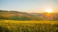 T/L Felder Weizen in der Toskana