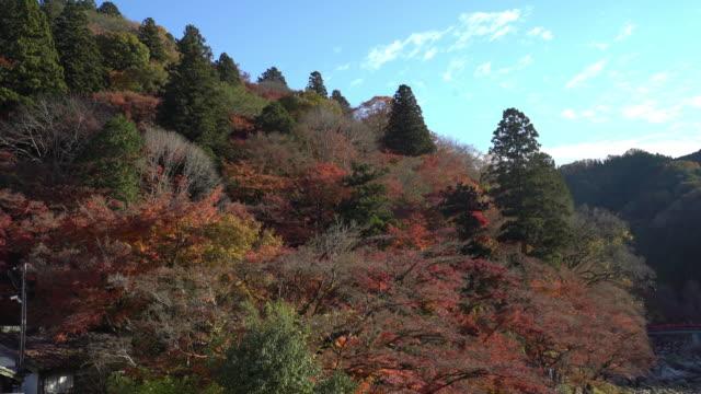 Film-Neigung: Korankei Waldpark mit Herbst rot verlassen Nagoya Japan