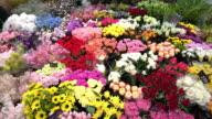 Film Tilt van bloemenwinkel in Osaka markt