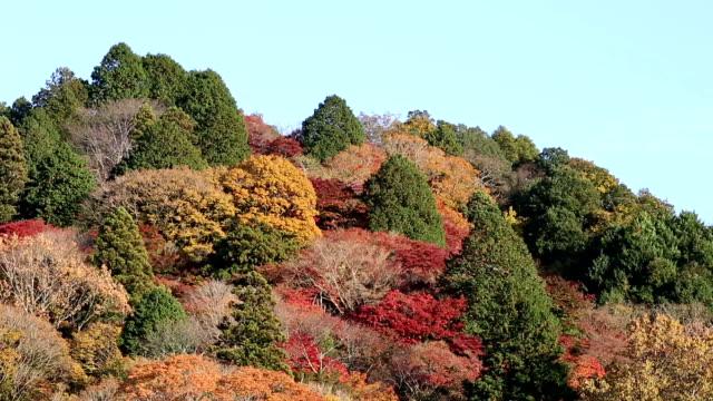 Film Tilt shot korankei Forest park with Autumn Red Leave Nagoya Japan