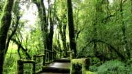 HD Film Tilt: wooden walkway through in deep rain forest