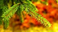 Fir with autumn background