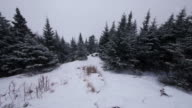 Fir woods, snow, snowflakes, bench, Stowe, USA
