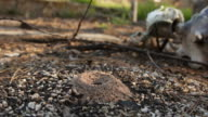 Fire Ants After Fire Destruction