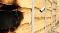 Elden flamma bränner en yta av trä.