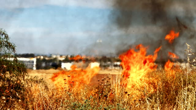 Fire in the dry field