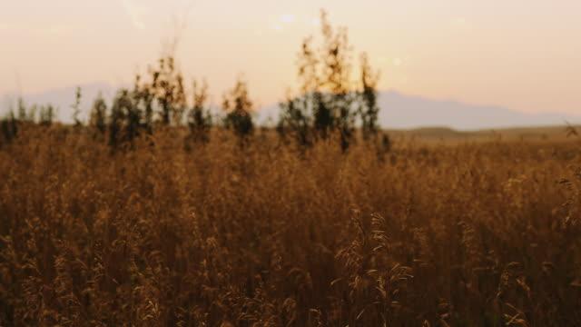 A Feuer Abendrot über Bäume und Rasen langsam im Wind wehen, diese Aufnahme ist perfekt für Grafik oder ein Logo.