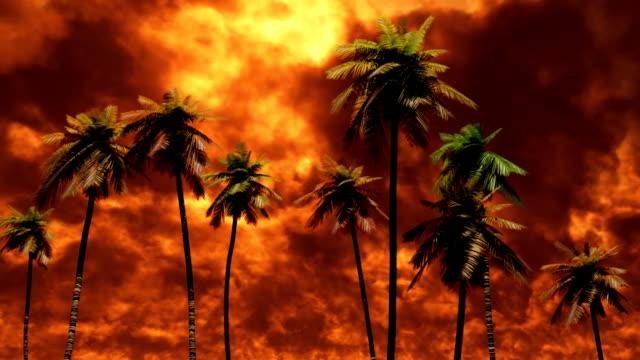 Fire sky over palm trees