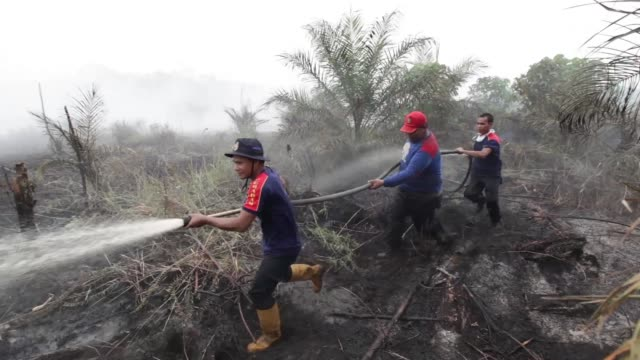 A firefighter hoses down burnt off vegetation from forest fires in Siak Riau Province Firefighters hose down burnt off vegetation from forest fires...