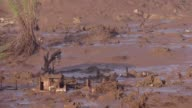Firefighters discovered more bodies early Friday after at least 17 people where killed when a dam burst at a mining waste site in Brazil unleashing a...