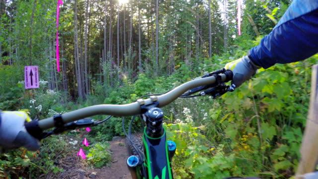 First person perspective mountain biking through rainforest