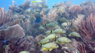 Fish Among The Soft Corals