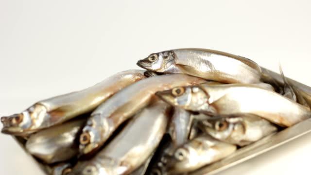 fish capelin