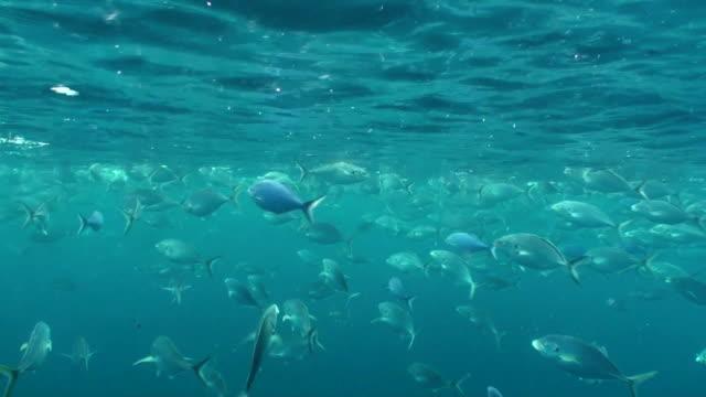 fish feeding underwater