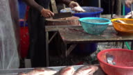 Fish for sale at fish market