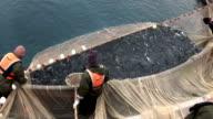 fish harvesting