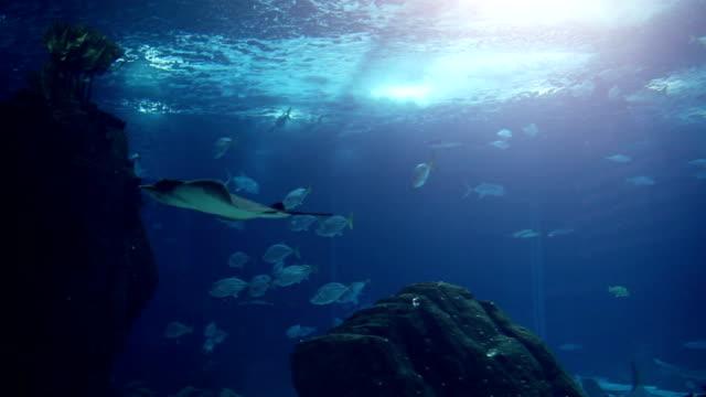 Fish in a big blue aquarium