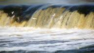 Fish jumping in waterfall