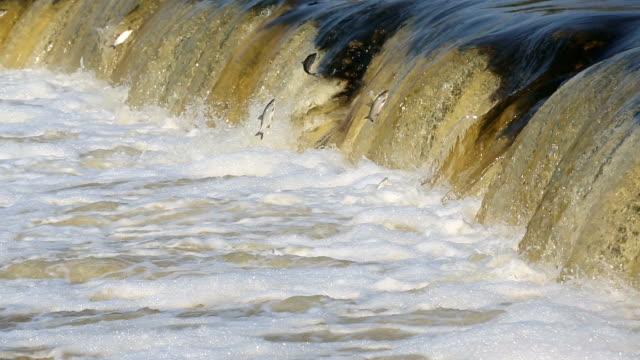 Pesce saltare in cascata