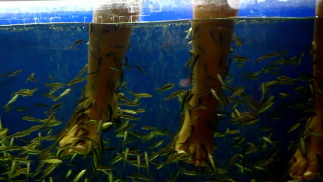 fish pedicure spa treatment