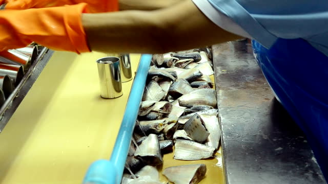 Fish Process In Factory