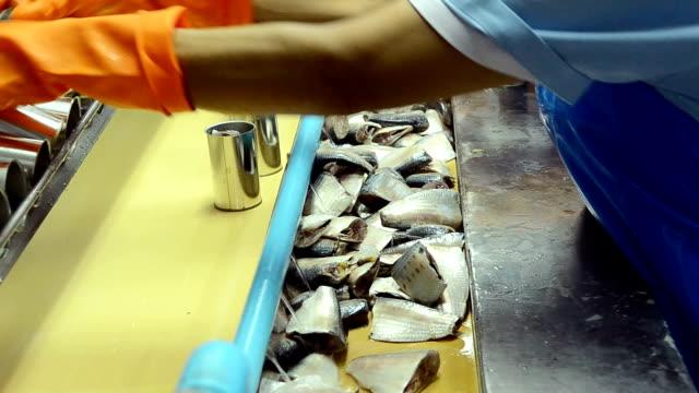 Fisch-Prozess In Fabrik