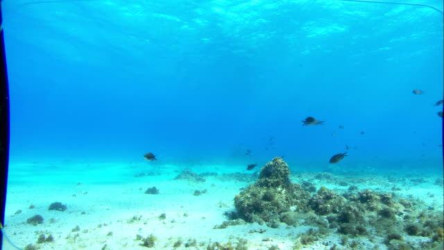 Fish swim in the Mediterranean Sea. Available in HD.