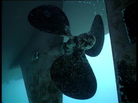 Fish swim near static ship's propeller, Galapagos