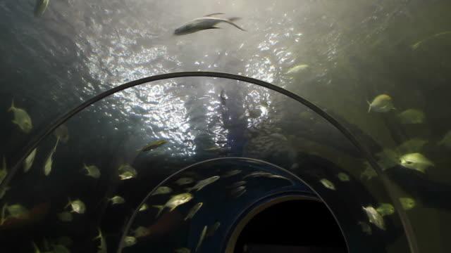 Fish tunnel in aquarium.