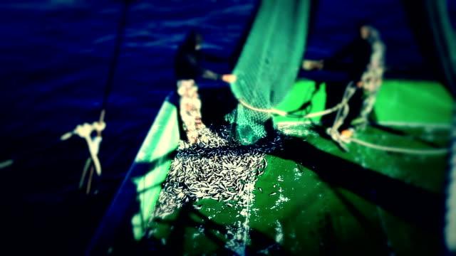 Fisherman Boat