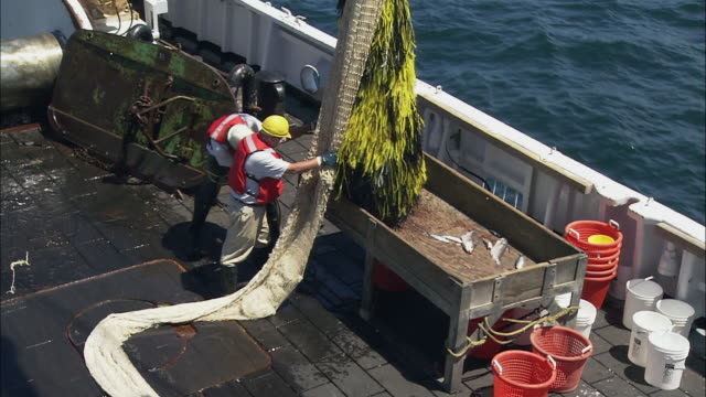 ZI Fishermen emptying the trawling nets which are filled with fish into a large container on deck / Atlantic Ocean