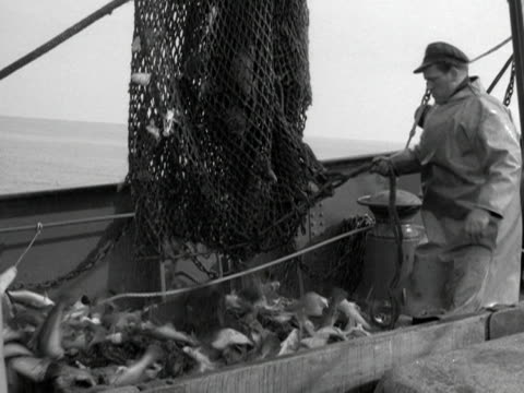 A fishermen releases a net full of fish onto the deck of a trawler