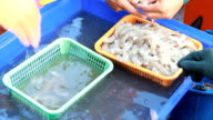 fishermen were selected shrimps.