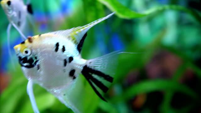 Fishes in aquarium.