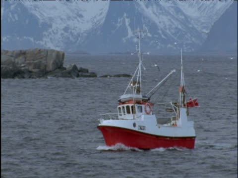 Fishing boat and following gulls enter fjord