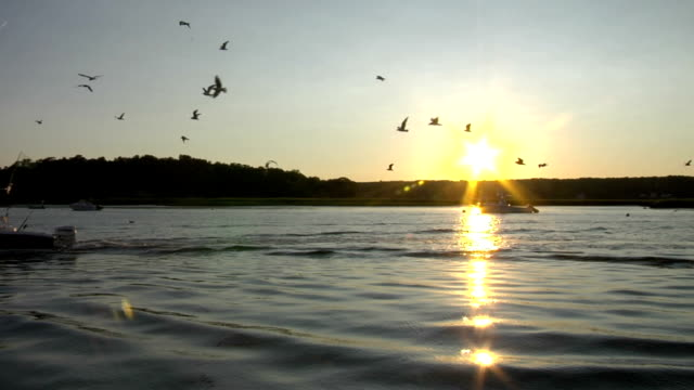 Fishing Boat at sunset, followed by seagulls
